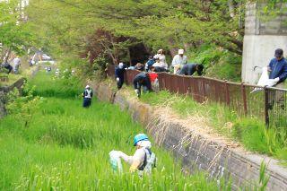 20140525-吉田川清掃08